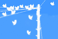 Happy Birds Tweeting
